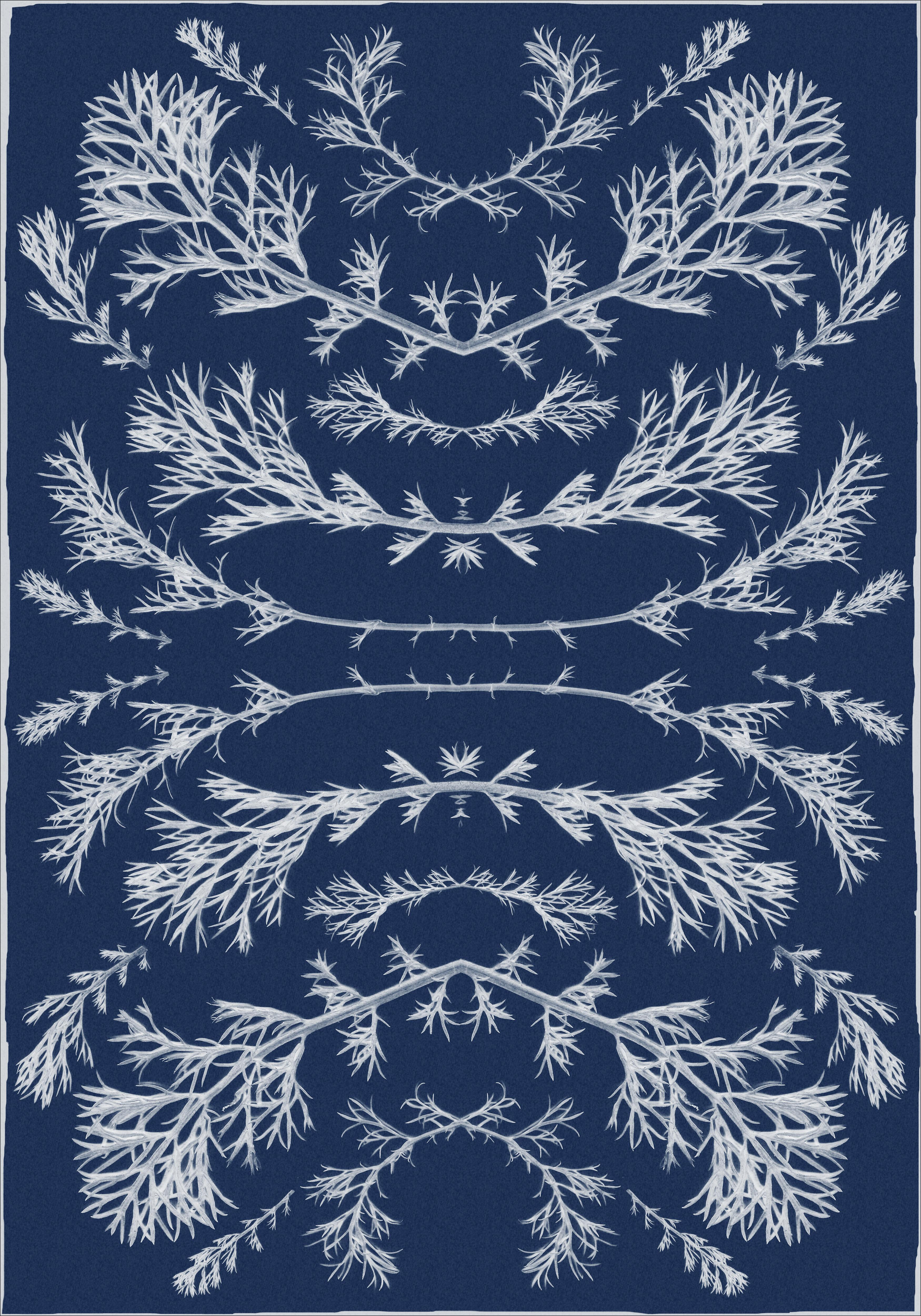Botanical Composition Cyanotype of Vintage Pressed Flowers, White and Blue