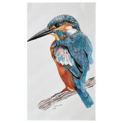 Kingfisher, Colored Pencil Drawing with Blue, Orange, Brown, Matted & Framed