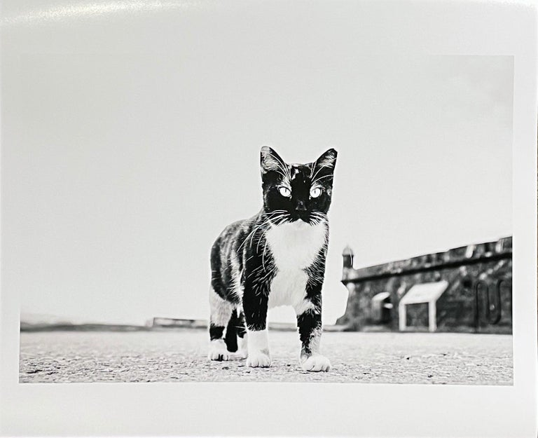 Cat, Puerto Rico - Black & White Photo of  Giant Looking Cat with Piercing Eyes - Gray Black and White Photograph by Kirill Polevoy
