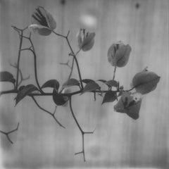 Black and white Delight -  21st Century, Polaroid, Landscape, Photography