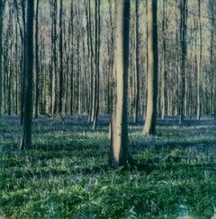 Bluebell Dream - Contemporary, Landscape, Woman, Landscape, Polaroid, Color, 21s