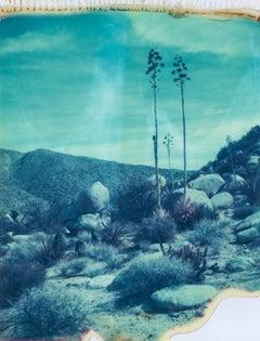 Botanicals I, 21st Century, Polaroid, Landscape Photography, Contemporary