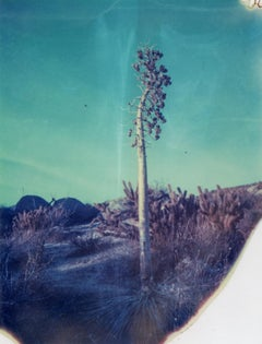 Botanicals II, 21st Century, Polaroid, Landscape Photography, Contemporary