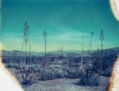 Botanicals III, 21st Century, Polaroid, Landscape Photography
