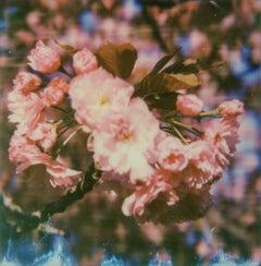 Burst - Contemporary, Landscape, Flower, Landscape, Polaroid, Color, Spring