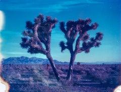 Connected - 21st Century, Contemporary, Landscape, Polaroid