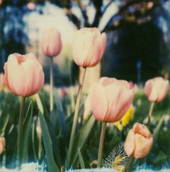 Remember Amsterdam, 21st Century, Polaroid, Flower Photography, Contemporary