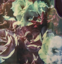 Time Zero Flowers - Contemporary, Landscape, Polaroid, Photograph, Expired