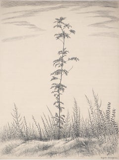 A Young Tree  - Original handsigned etching, Limited to 50 copies, 1953