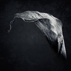 Lily Noir, Photograph, Archival Ink Jet