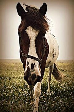 Sascha The Horse