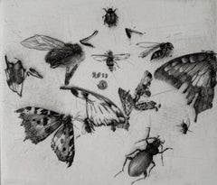 Insects - 21st Century Figurative Copperplate Print Black & White