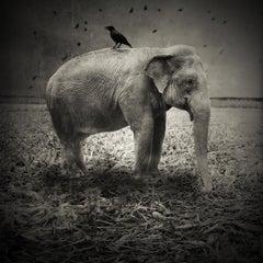 Krzysztof Wladyka, Animaly 01, (elephant)