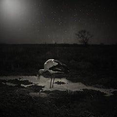 Krzysztof Wladyka, Animaly 38, (bird)