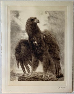 Curt Meyer-Eberhardt (1895-1977) Portrait of a Lofty Eagle c.1930