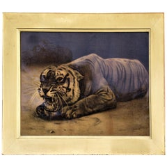 Antique Framed Print of a Tiger