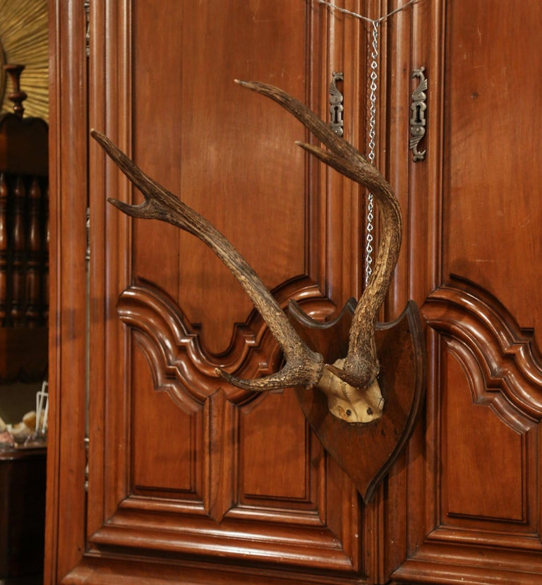 Create a rustic style in your home or ranch house with these wall-mounted deer antlers. From Normandy, France, circa 1870, this large, six-pointer deer trophy has a thick girth and was mounted on a carved, walnut plaque so that it can be hung