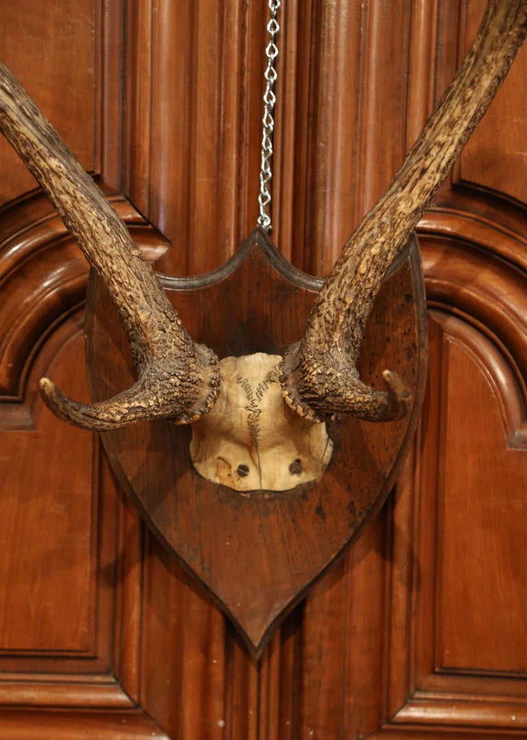 Hand-Carved 19th Century French Mounted Deer Antler Trophy on Carved Walnut Plaque For Sale