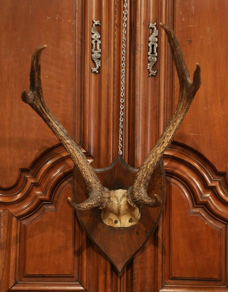 19th Century French Mounted Deer Antler Trophy on Carved Walnut Plaque In Excellent Condition For Sale In Dallas, TX