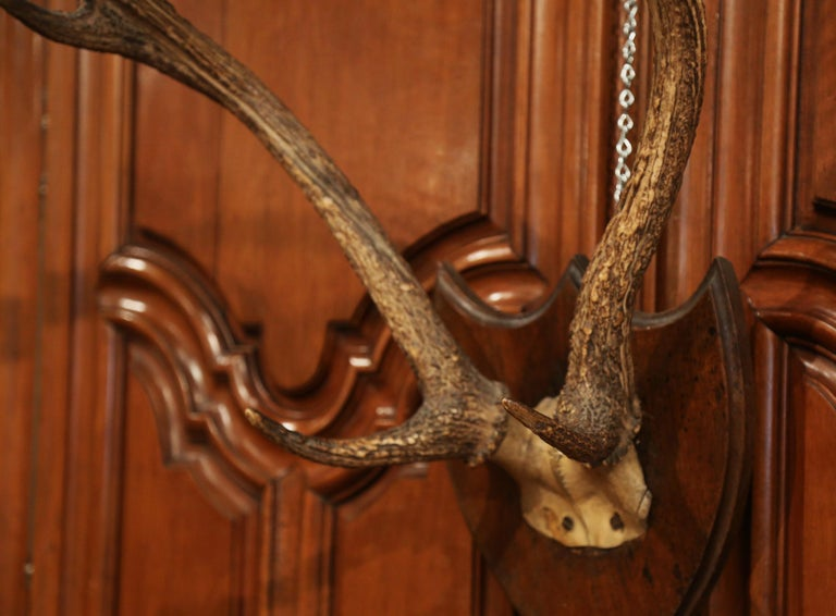 Horn 19th Century French Mounted Deer Antler Trophy on Carved Walnut Plaque For Sale