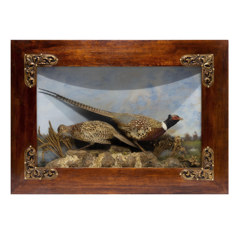 Large 19th Century Pheasant Diorama