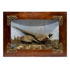 Large 19th Century Pheasant Diorama