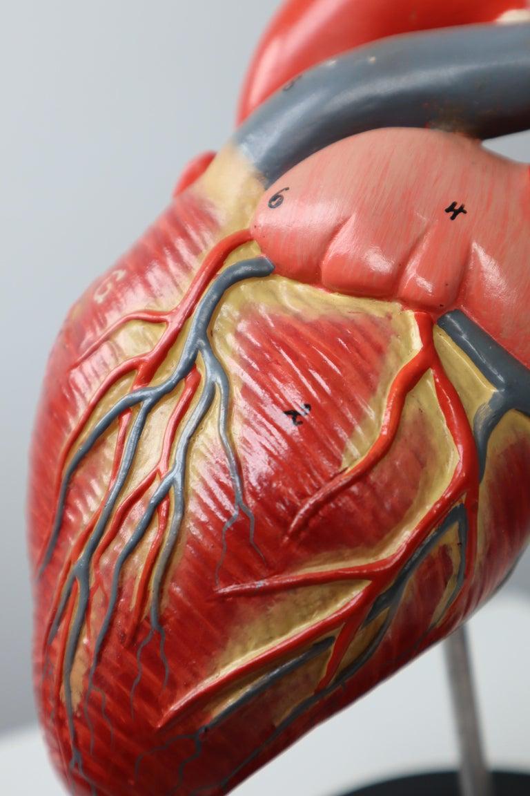 Anatomical teaching