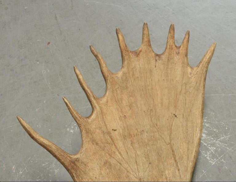 Hand-Crafted Large and Impressive Swedish Elk Antlers with 29 Points For Sale