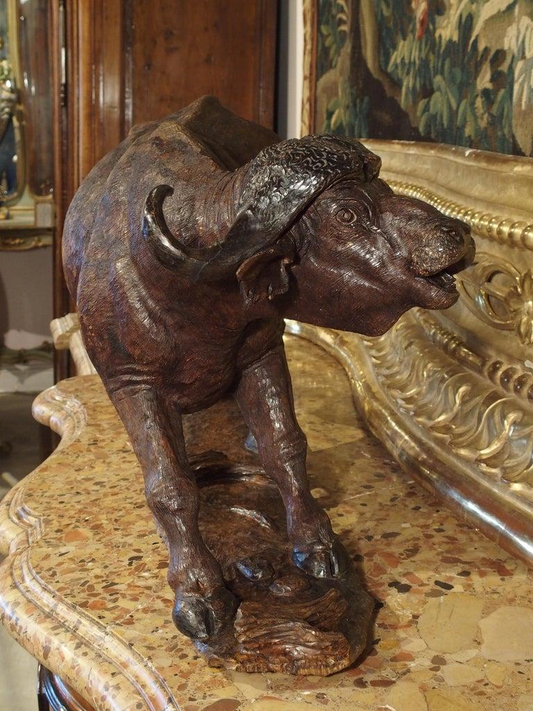 Large Antique African Hardwood Cape Buffalo Sculpture, circa 1900 For Sale 13
