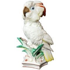 Large Antique Meissen Porcelain Model of a Seated Cockatoo, Pfiffer Period