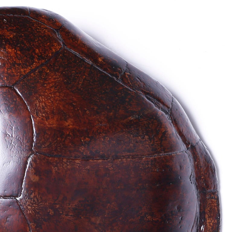 British Colonial Large Antique Turtle Shell For Sale
