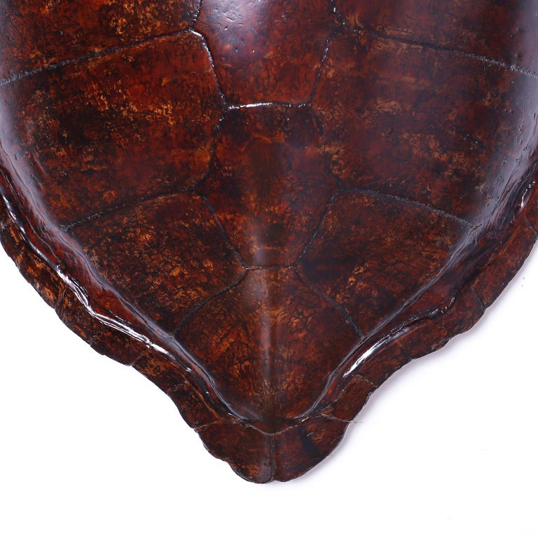 American Large Antique Turtle Shell For Sale
