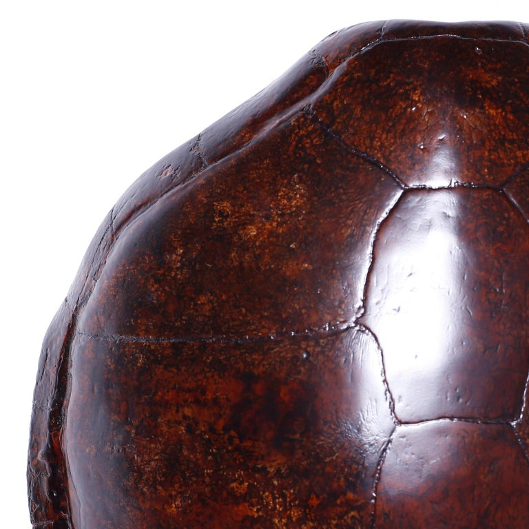 19th Century Large Antique Turtle Shell For Sale