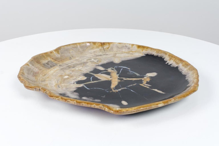 This large petrified wooden platter is an item of ancient organic origin. The material is smooth sanded on both sides. The black and beige tones of the object are a natural result of the organic process of petrification. The listed item is of