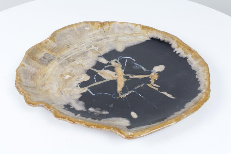 Organic Modern Large Black and Beige Petrified Wooden Platter, Accessory of Organic Origin For Sale
