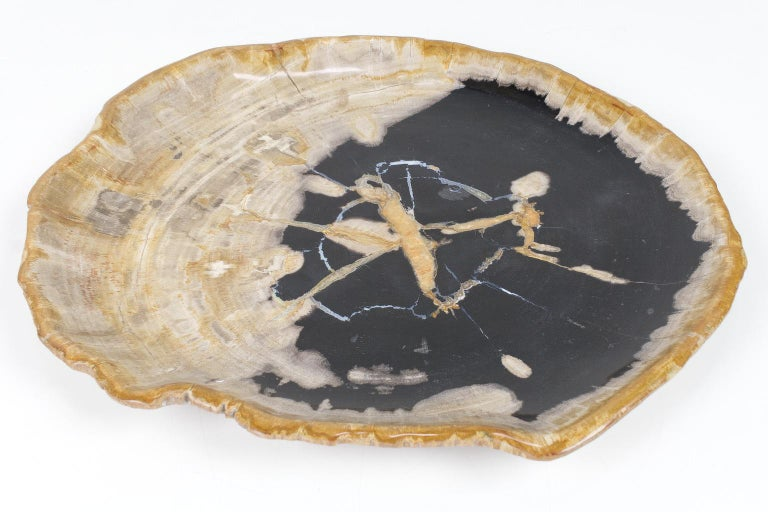 Indonesian Large Black and Beige Petrified Wooden Platter, Accessory of Organic Origin For Sale