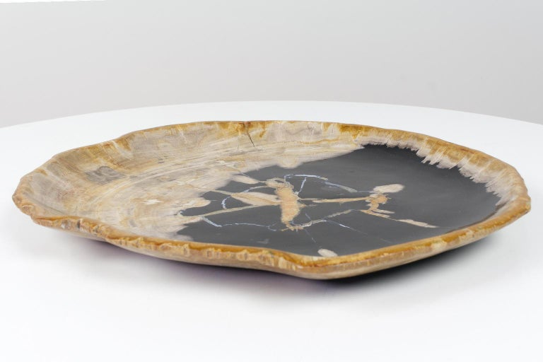 Large Black and Beige Petrified Wooden Platter, Accessory of Organic Origin In Excellent Condition For Sale In Beek en Donk, NL