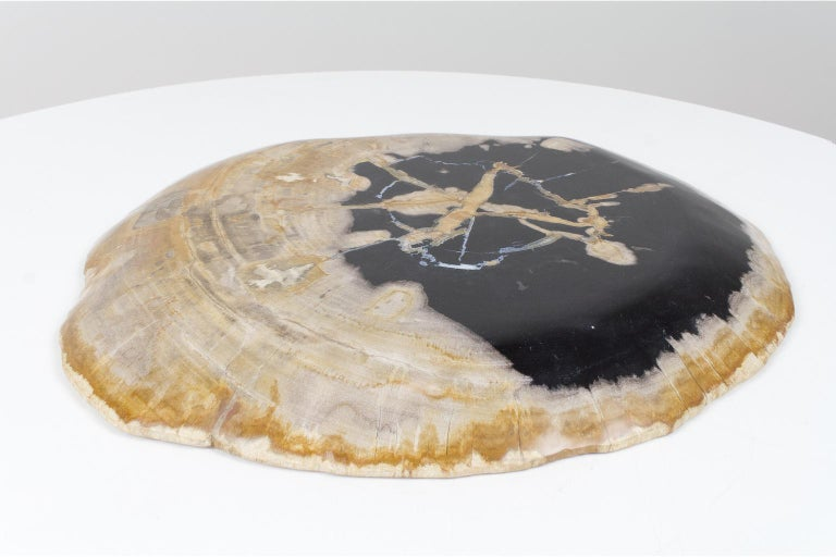 18th Century and Earlier Large Black and Beige Petrified Wooden Platter, Accessory of Organic Origin For Sale