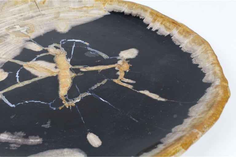 Stone Large Black and Beige Petrified Wooden Platter, Accessory of Organic Origin For Sale