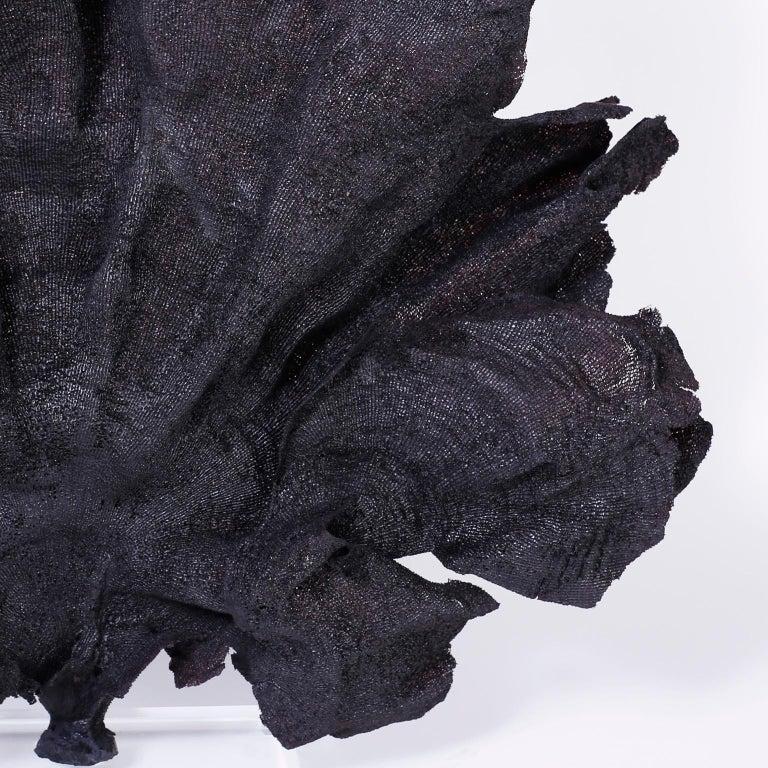 Solomon Islands Large Black Fishnet Sea Sponge For Sale