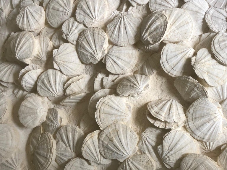 Prehistoric Large Block of Pecten Fossils in Limestone, France, Miocene Era For Sale