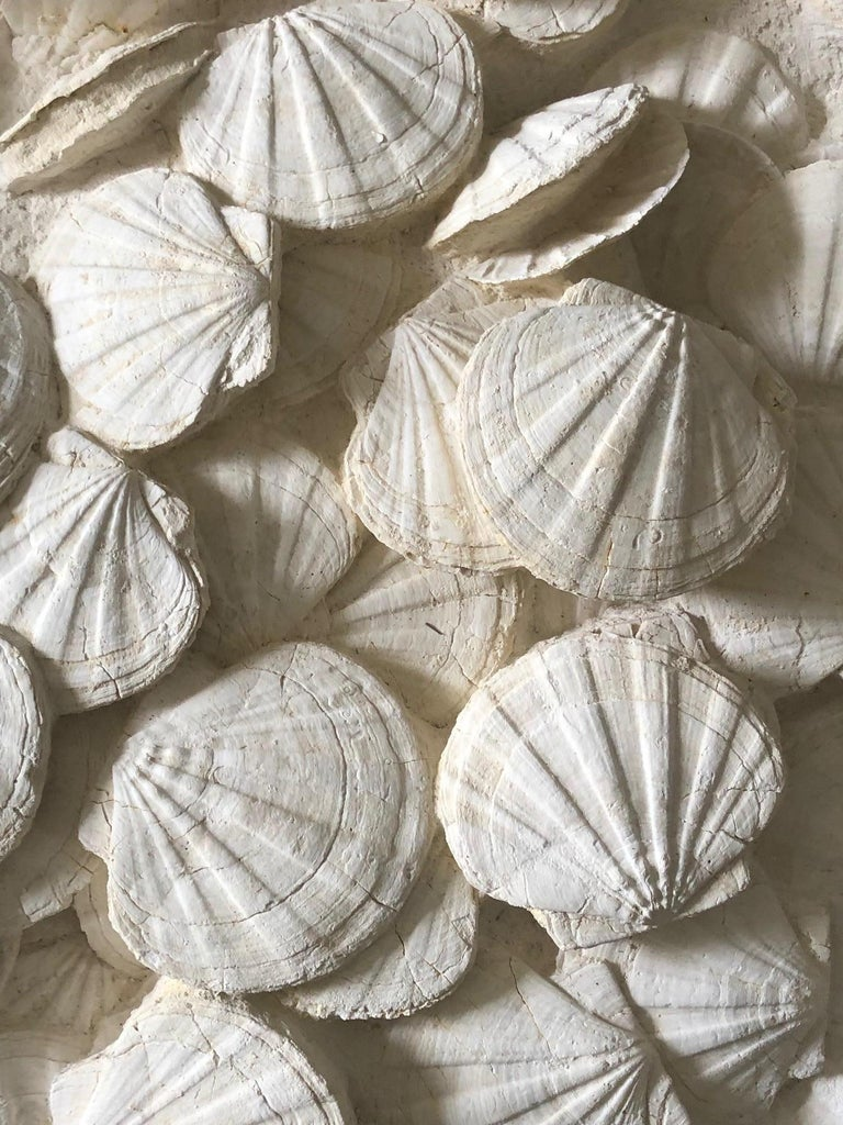 Large Block of Pecten Fossils in Limestone, France, Miocene Era For Sale 1