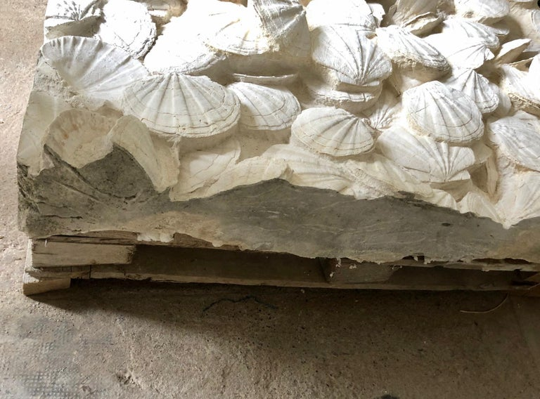 Large Block of Pecten Fossils in Limestone, France, Miocene Era For Sale 3