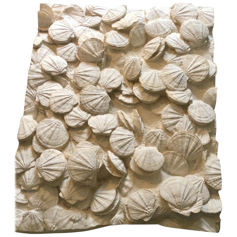 Large Block of Pecten Fossils in Limestone, France, Miocene Era