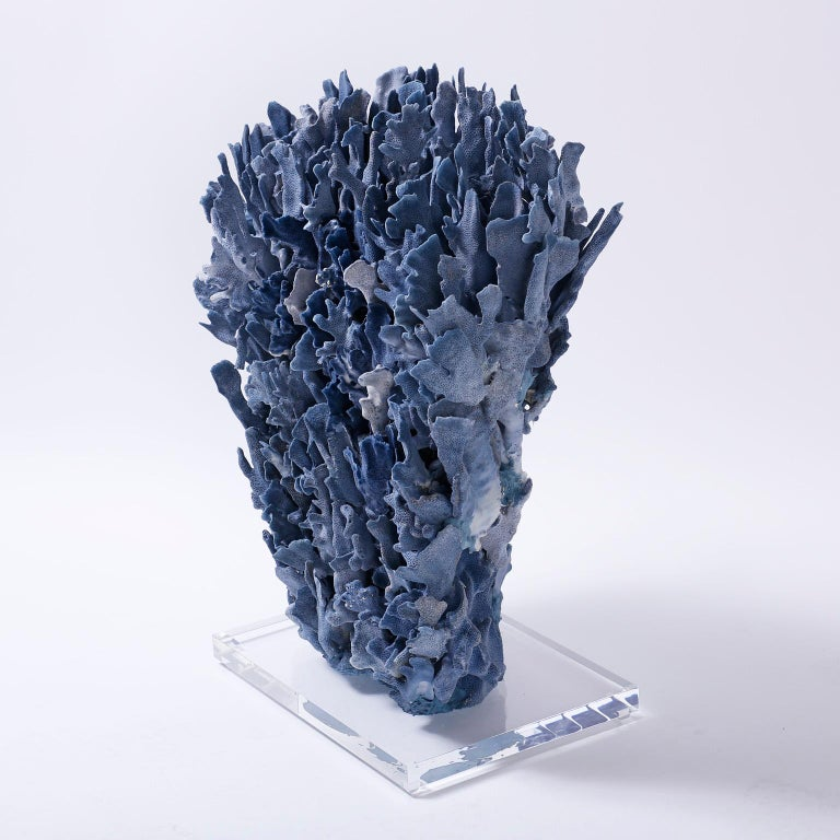 Contemporary Large Blue Coral Sculpture Mounted on Lucite For Sale