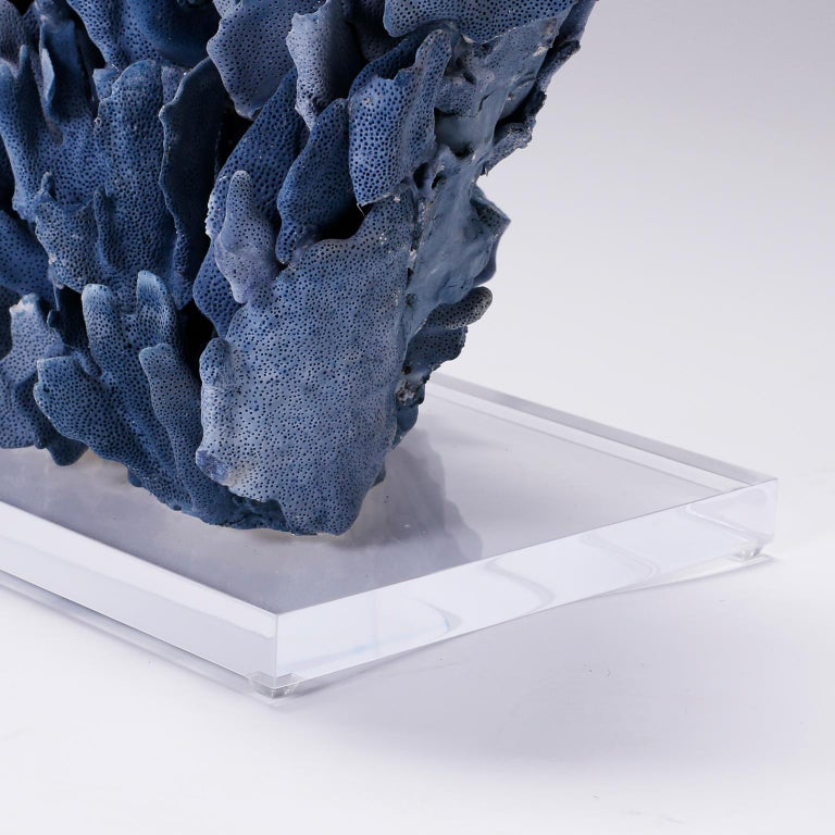 Contemporary Large Blue Coral Sculpture on Lucite For Sale