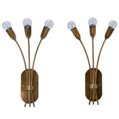Large Botanical Sconces