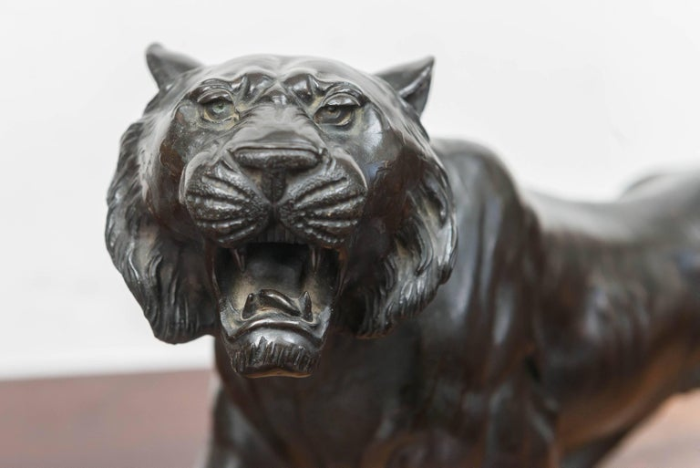 Large bronze Japanese Meiji period tiger on a natural carved wood base, circa 1890. Robust and energetic in a walking pose. Textured stripes in subtle relief with an even dark brown patina. Carved, fitted, heavy wood base done in a natural style of