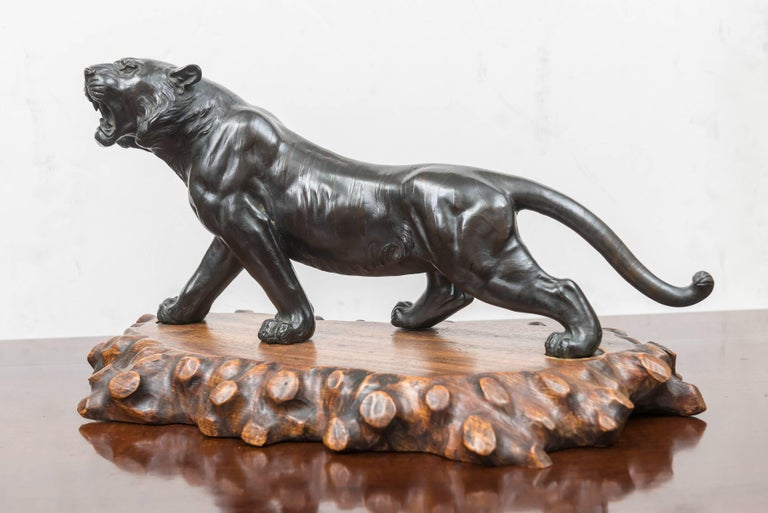 Hand-Crafted Large Bronze Japanese Meiji Period Tiger on a Natural Carved Wood Base For Sale