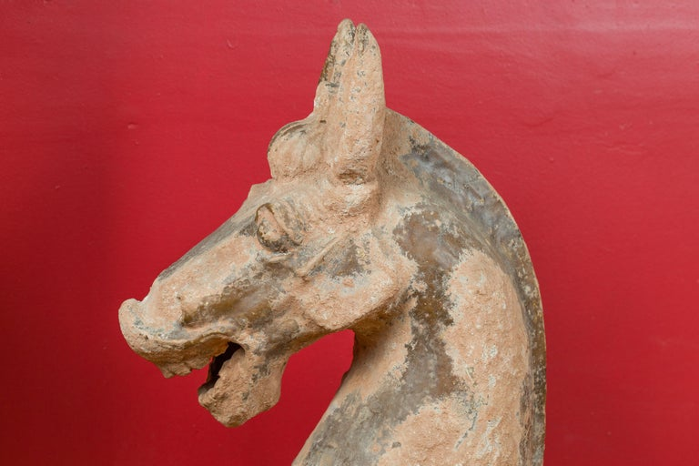 18th Century and Earlier Large Chinese Han Dynasty Period Terracotta Horse, circa 202 BC-200 AD For Sale
